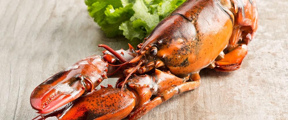 Frozen Lobster Bodies